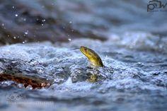 http://ift.tt/1K6283m #animals Fishing. by ArvieVaid http://ift.tt/1L82tOe #pierceandbiersadorf