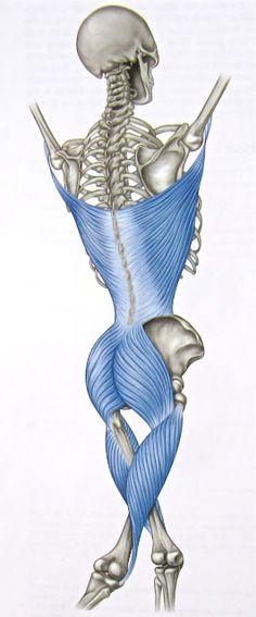 Posterior oblique fascial sling - foam rolling link