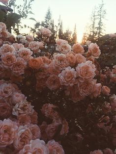 "mermaaidy: "" Summer evening neighborhood walks "" Plants are definitely the most important things that Wild Flowers, Beautiful Flowers, Bouquet Flowers, Wedding Flowers, Watercolor Flower, Flower Collage, No Rain, Flower Aesthetic, Nature Aesthetic"