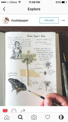62 Ideas Drawing Nature Journal Pages For 2019 Garden Journal, Nature Journal, Illustration Cartoon, Illustrations, Botanical Drawings, Botanical Illustration, Plant Sketches, Art Watercolor, Journal Pages