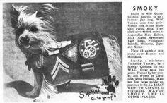 #History of Smoky – The First #Therapy #Dog. El primer #perro de #terapia. #mascota