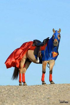 Funny...how natural this costume looks...maybe that's because they are ALL Super Horses...they are ALL Hero's ♥♥♥