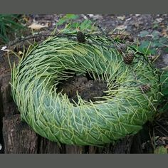 Grave Decorations, Christmas Decorations, Decor Crafts, Diy And Crafts, Home Decoracion, Dry Plants, Advent Wreath, Painted Leaves, Funeral Flowers