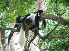 Singapore Zoo:  We were about this close to a lemur w/ only a low railing between us!