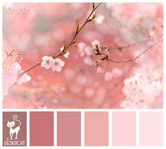 Cherry Blossom - Pink, blush, dusky, rose Designcat Colour Inspiration Board