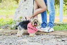 save the date criativo cachorro