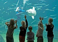 Skagen: Nordsoen Oceanarium