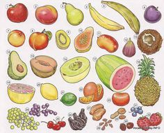 English For Beginners: Fruits in English Dictionary For Kids, Picture Dictionary, Plum Apricot, Fruits Online, Food Vocabulary, English Vocabulary, Fruit Crafts, English For Beginners, Fruit List