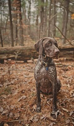 if i could go exploring with a bud like this..  Engaging Tails: Fynn   Daily Dog Tag