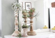 Decorating with Air Plants | Inspired by Charm