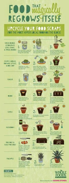Recycle your kitchen scraps by growing more food
