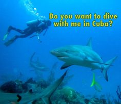 It was my dream for 2016 to travel to Cuba and dive at Gardens of the Queen! Here I answer some of the questions I have been asked about my adventure.