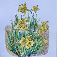 Create floral art with Graphite Pencil Design Set - Tin of 12, Pitt Artist Pens and Goldfaber Color Pencils. These step-by-step instructions make creating simple and fun! Pitt Artist Pens, Pencil Design, Nature Drawing, Design Set, Faber Castell, Shades Of Yellow, Creative Studio, Daffodils, Graphite