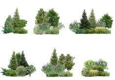 Подбор общей концепции в композиции растений. Лесной стиль. #ландшафтыйдизайн #ландшафтный_дизайн #ландшафтныйскетчинг #проектсада #дача…