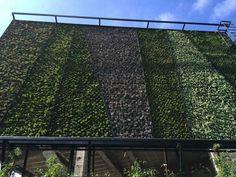 verde 360º mejorando la privacidad