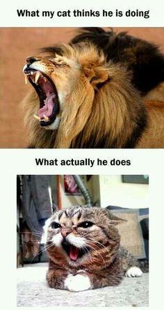 Top Laughing So Hard Cat Memes & Grumpy Cat Memes 12 Days Of Christmas Funniest Cat Memes, Funny Animal Memes, Cute Funny Animals, Cute Baby Animals, Funny Cute, Funny Memes, Scary Funny, Memes Humor, Videos Funny