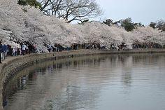 Looks like Kakunodate, Akita  in Japan.