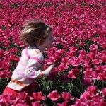 i dream of bringing my babies to the tulip fields in Holland....