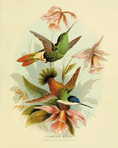 Hummingbirds wall decor Bird art print Antique wall art nature wall art Vintage…