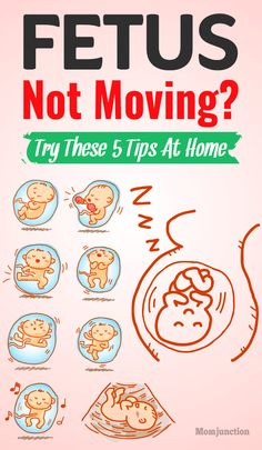 Fetus Not Moving? Try These 5 Tips At Home Fetus Not Moving? Try These 5 Tips At Home : The first time the baby kicks is a thrilling and exciting moment for most mothers, one that they would like to experience again and again. Happy Pregnancy, Pregnancy Guide, Trimesters Of Pregnancy, Pregnancy Health, Pregnancy Care, Pregnancy Stages, Pregnancy Problems, Pregnancy Jokes, Pregnancy Nutrition