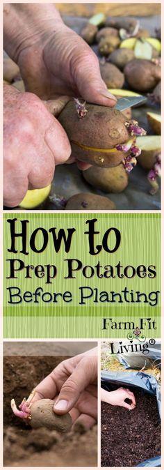 Potato Prep: How to Prepare Your Spuds for Planting via @www.pinterest.com/farmfitliving #Gardening #gardeningtools