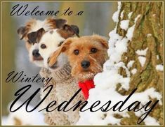 Wednesday Greetings, Wednesday Hump Day, Happy Wednesday Quotes, Good Morning Wednesday, Wednesday Humor, Wacky Wednesday, Wonderful Wednesday, Good Morning Good Night, Good Morning Images