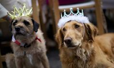 Two dogs wearing crowns sit as residents of a street in Battersea hold a Jubilee street party.