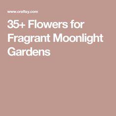 35+ Flowers for Fragrant Moonlight Gardens