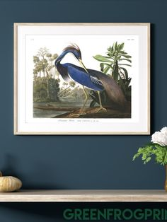Beautiful High Definition Large Art Prints of Audubon's Original Etched Plates with Eco Friendly Ink, Birds Of America, Art Prints, Paper Artwork, Heron Art, Art, Large Art Prints, Canvas Art, America Art, Audubon Prints