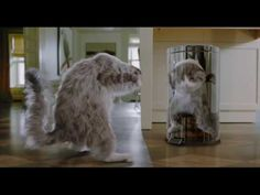Kevin Spacey no trailer da comédia 'Virei um Gato' - Cinema BH