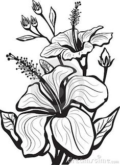 Hibiscus Royalty Free Stock Photo - Image: 8754095