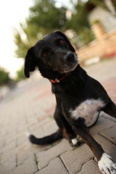 "It's name is ""Biber"" Photography Portfolio, Cute Dogs, Animals, Animales, Animaux, Animal, Animais, Funny Dogs"