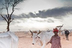 A young boy takes bone-thin cattle in search of pasture at the edge of Dagahaley refugee camp in Kenya.