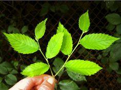 27 Highly Medicinal Plants Worth PlantingREALfarmacy.com | Healthy News and Information