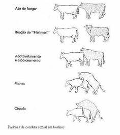 UFF - Fisiologia Veterinária - Reprodução nas fêmeas