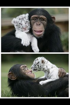 Monkey and tiger :)