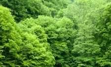 Puterea terapeutica a copacilor Herbs, Herb, Medicinal Plants