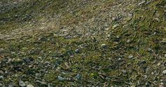 Moss / Pebbles / Sticks
