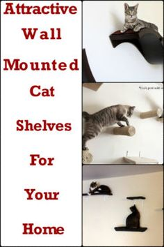 Wall Shelves For Cats To Climb On | WebNuggetz.com