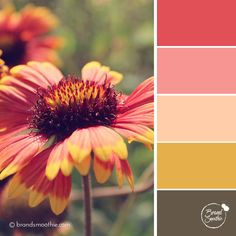 Red Summer colour palette by Brand Smoothie