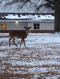 Deer at work