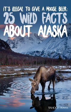 It's Illegal to Give a Moose Beer: 25 Wild Facts About Alaska