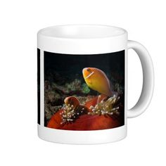 This coffee mug features a pair of Pink Skunk Clownfish in a balled up Heteractis Magnifica sea anemone on the Great Barrier Reef in the Coral Sea.