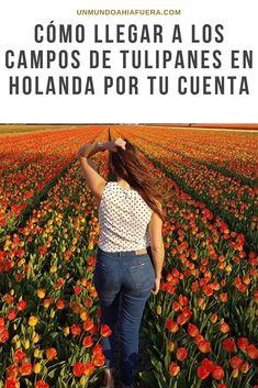 ¿Siempre te preguntaste como ver tulipanes en holanda sin tener que pagar por entrar al parque de keukenhof? te cuento que podés ver tulipanes gratis en los paises bajos simplemente pedaleando unos kilometros desde amsterdam hacia hillegom. En el post te cuento cómo ver los campos de tulipanes totalmente gratis (si tenes acceso a una bicicleta). #tulipanes #camposdetulipanes #holanda #paisesbajos #viajaraholanda #vertulipanes Amsterdam Travel, World Traveler, Europe, Instagram, Tips, Travel Blog, Places To Travel, Travel Themes, Field Of Flowers