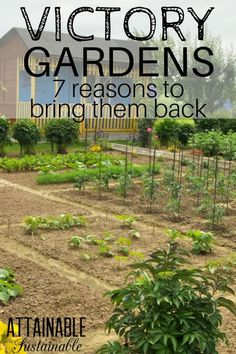 During WWI and WWII, victory gardens grown in most backyards provided extra food for the family, giving them the nutrition they needed without great expense. There are plenty of good reasons to bring the idea of victory gardens back. #gardens #vegetablegardens #homestead #growfood via @Attainable Sustainable
