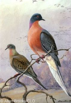 The Passenger Pigeon was once the most populous bird on the planet, swarming in flocks of millions. Humans hunted them to extinction by 1914 but could we bring them back?