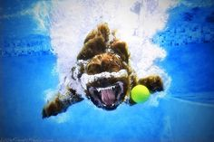 More Hilarious Photos of Dogs Playing Fetch Underwater - My Modern Metropolis