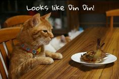 Yummy! #cats #cat #candycat