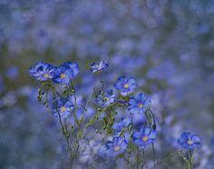 Photographer Вероника Бабенко (Veronika Babenko) - Просто была весна... #1449503. 35PHOTO