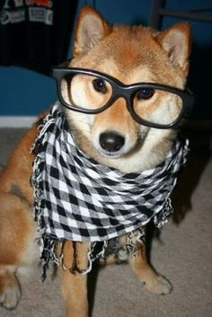 Shiba Inu Glasses